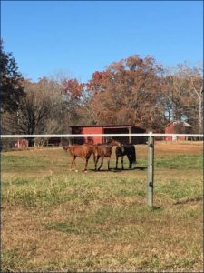 Berger Lane in his new home with fellow TFH grads Pistol's Shoes and Pittsburgh Phil